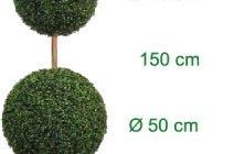Decor Növények